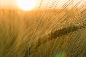 Sonnenschein produziert Vitamine