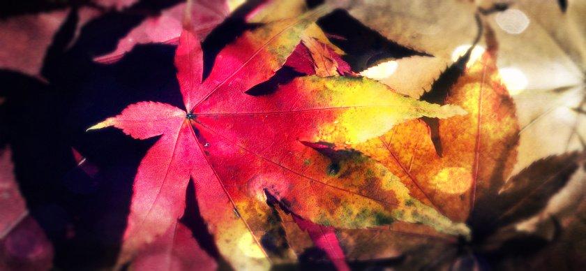 Herbst Wechseljahre